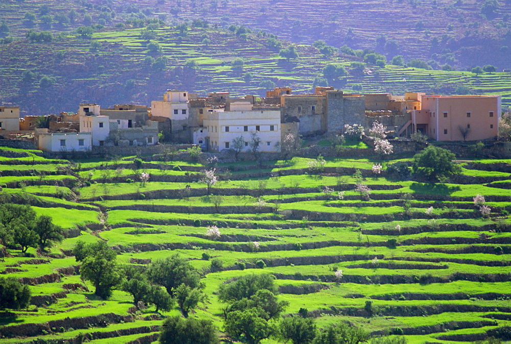 Terraced landscape, Taroudant, Morocco, North Africa - 712-1311