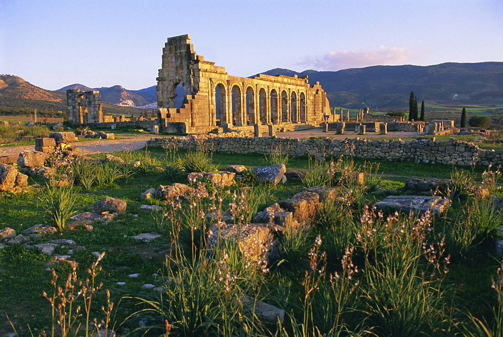 Roman archaeological site, Volubilis, Meknes Region, Morocco, North Africa, Africa