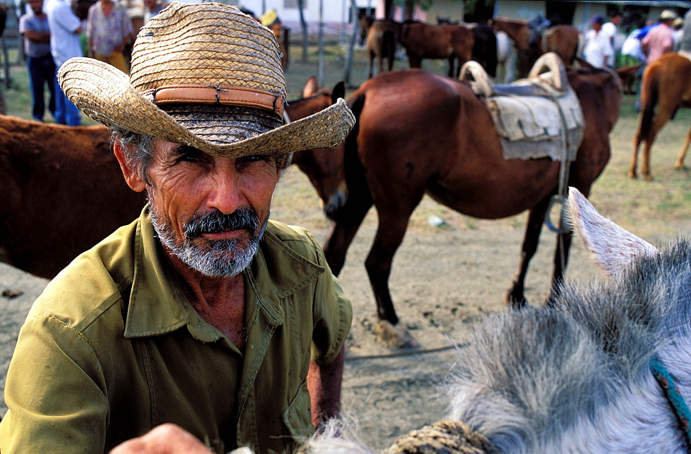 Horse market, Region of Holguin, Cuba, Central America