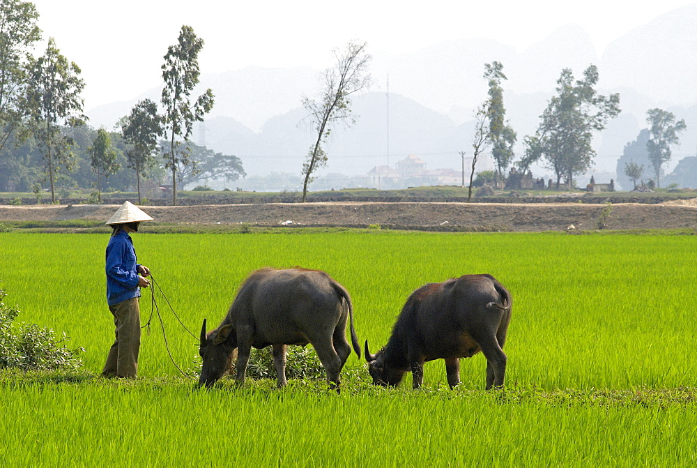 Tam Coc, Ninh Binh area, Vietnam, Indochina, Southeast Asia, Asia