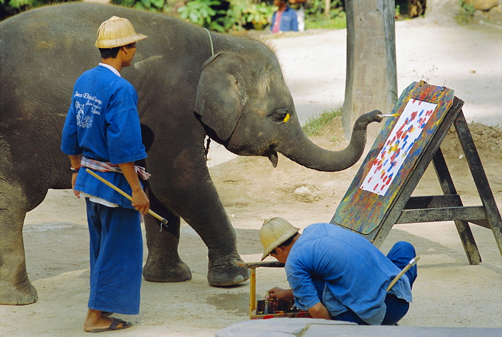 Elephant painting with his trunk, Mae Sa Elephant Camp, Chiang Mai, Thailand, Asia