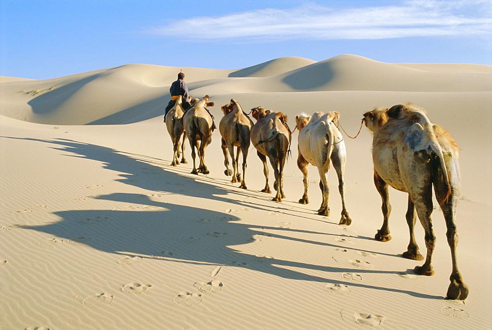 Camel caravan, Omnogov, Gobi Desert, Khongoryn Els Dunes, Mongolia *** Local Caption ***   - 712-767
