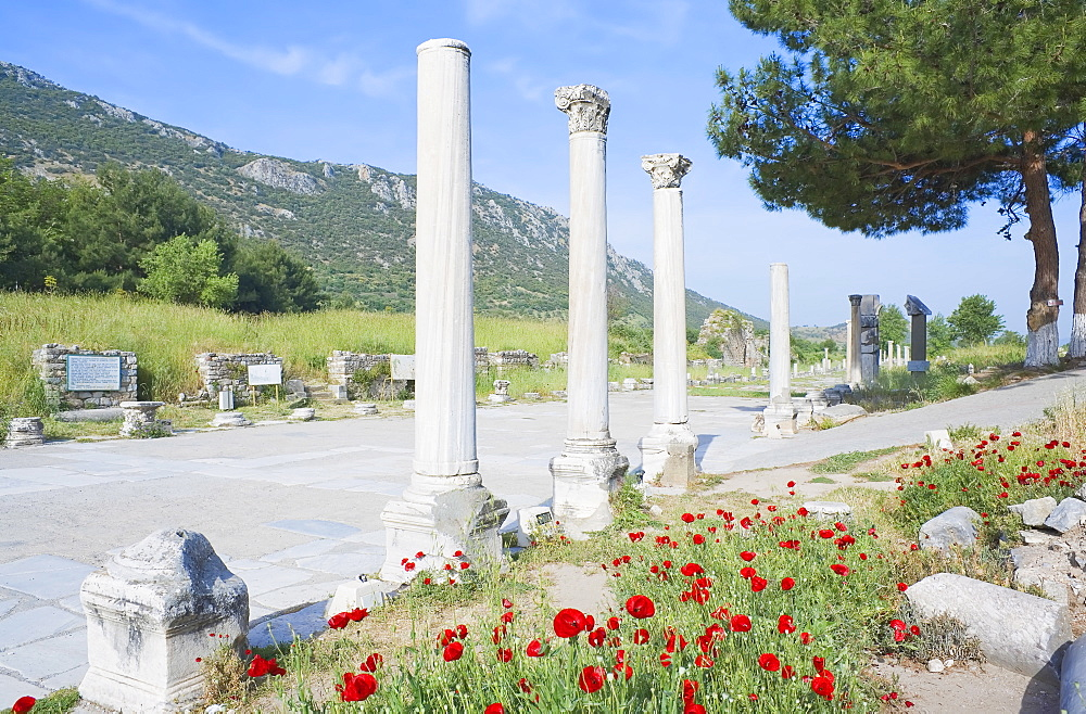 Classical columns located in the ancient commercial Agora, Ephesus, Anatolia, Turkey, Asia Minor, Eurasia