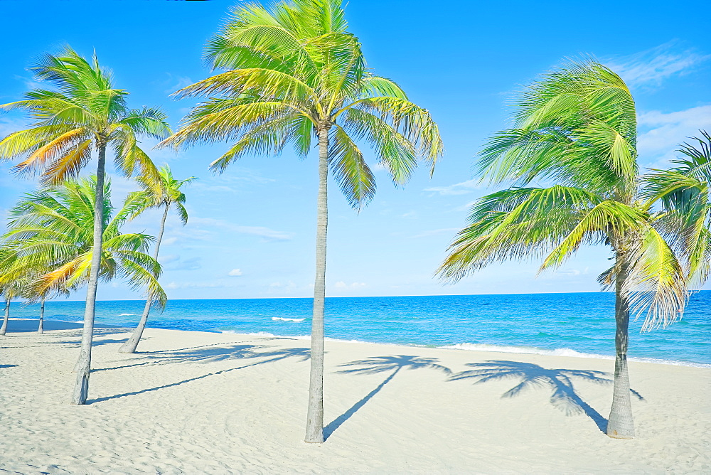Palm trees on tropical beach, Fort Lauderdale, Florida, United States of America, North America