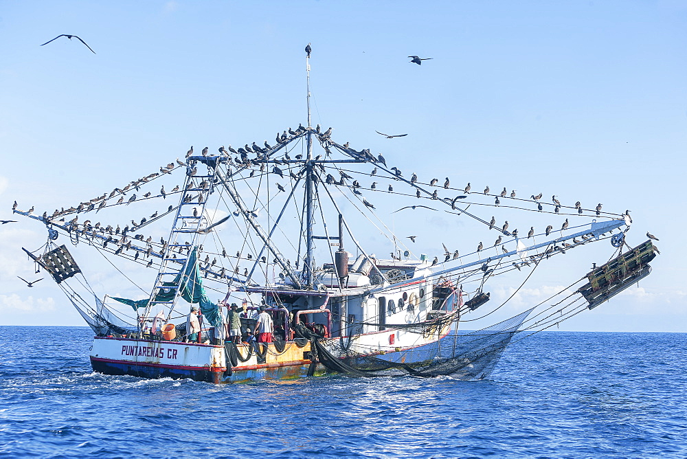Fishing boat accompanied by a flock of birds, Drake Bay, Osa Peninsula, Costa Rica, Central America
