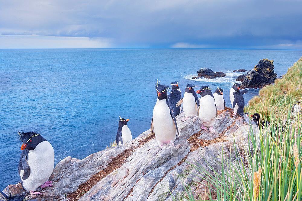 Group of rockhopper penguins (Eudyptes chrysocome chrysocome) on a rocky islet, East Falkland, Falkland Islands, South America - 718-2628