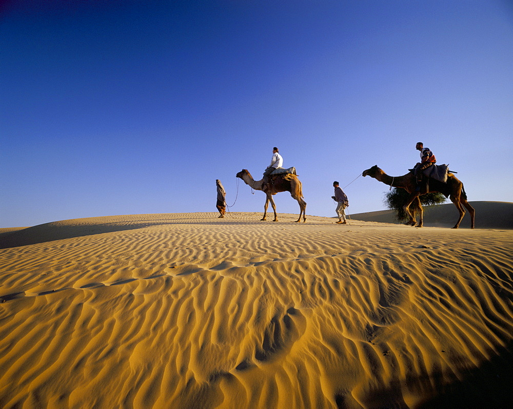 Caravan of people and camels in the Thar Desert, Rajasthan state, India, Asia