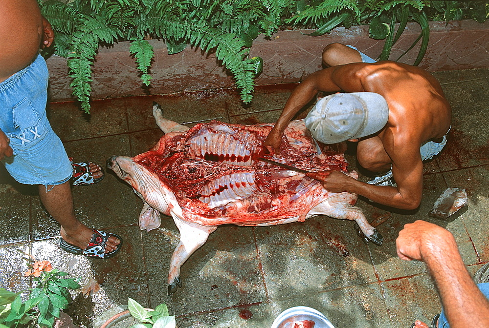 Cuba, Trinidad, preparing the pig for Mother's Day feast