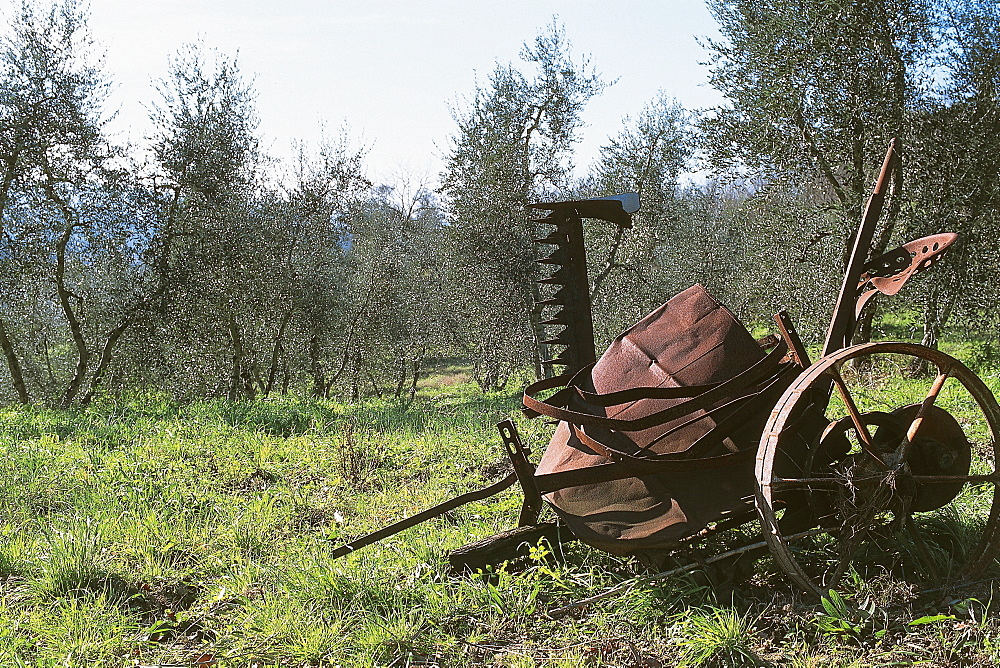 Italy, Tuscany, Peccioli, old grass-cutter discarded in an olive grove - 722-62
