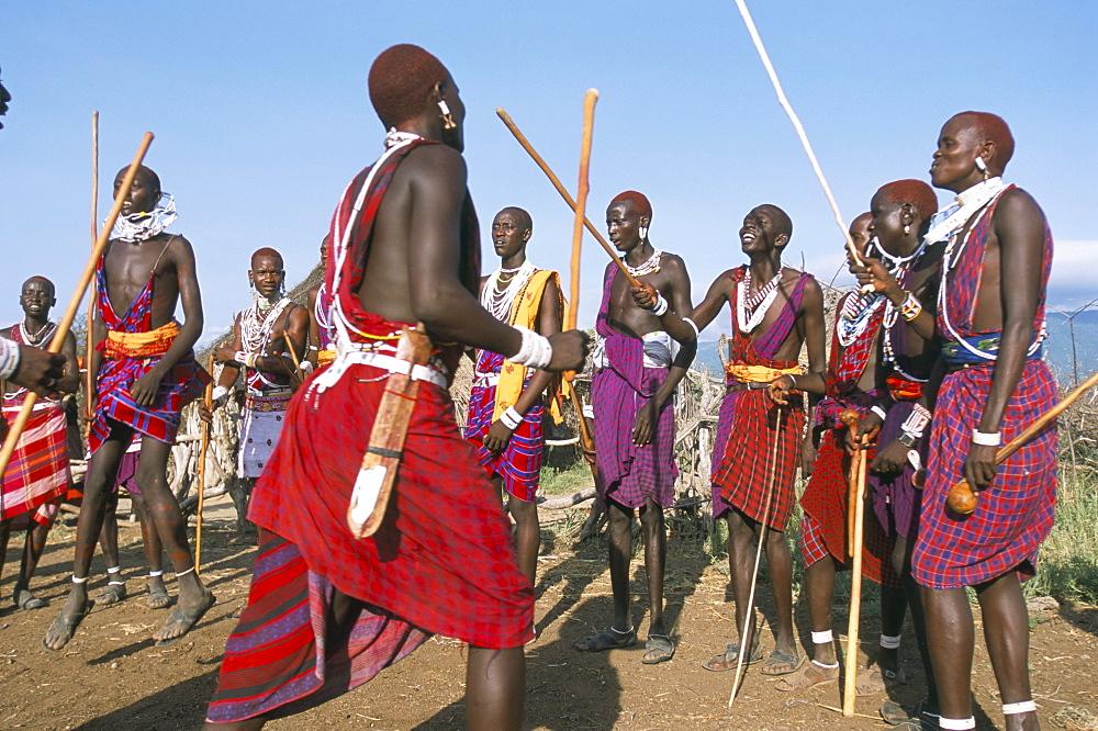 Alamal, ritual festival, Maasai village (manyatta), Rift Valley, southeast Kenya, East Africa, Africa
