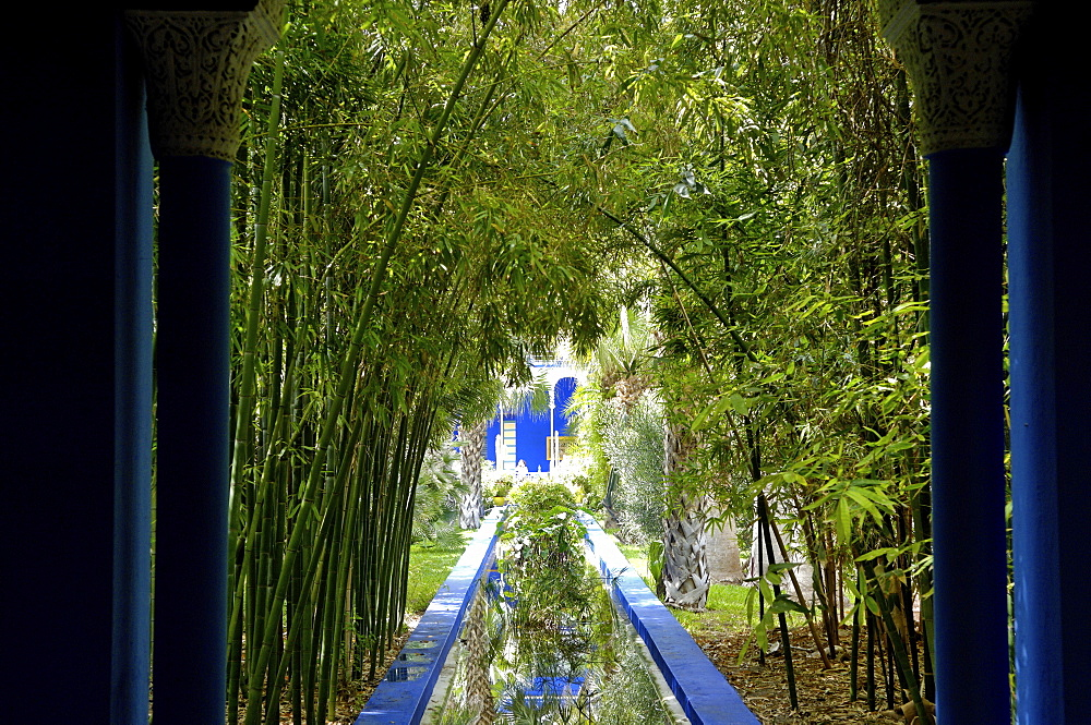Bamboo in the Majorelle Garden, created by the French cabinetmaker Louis Majorelle, and restored by the couturier Yves Saint-Laurent, Marrakesh, Morocco, North Africa, Africa
