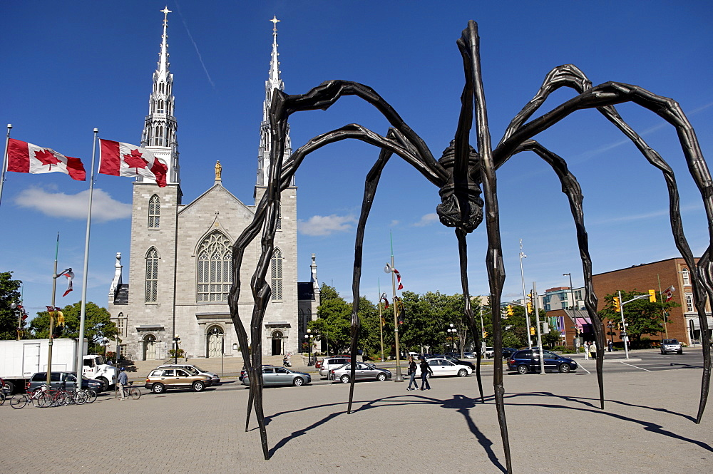 Maman a 21st century bronze sculpture of a spider, 9.25m high with a sac of 26 eggs, by Louis Bourgeois, in front of the Cathedral and Basilica of Notre Dame built between 1839 and 1885, Ottawa, Ontario, Canada, North America