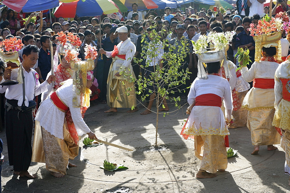 Felling trees ceremony (htein pin) at the biggest Nat ritual (Festival of Spirits) in Taungbyon, Mandalay Division, Republic of the Union of Myanmar (Burma), Asia  - 724-2372