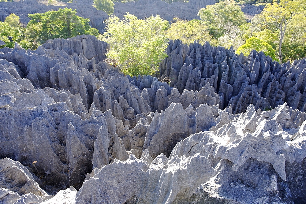 Tsingy de Bemaraha Strict Nature Reserve, UNESCO World Heritage Site, near the western coast in Melaky Region, Madagascar, Africa  - 724-2449