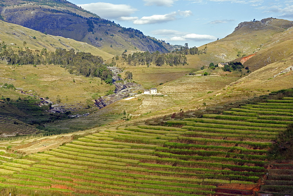 Landscape of the Highlands, Fianaranstoa region, Madagascar, Africa  - 724-2464