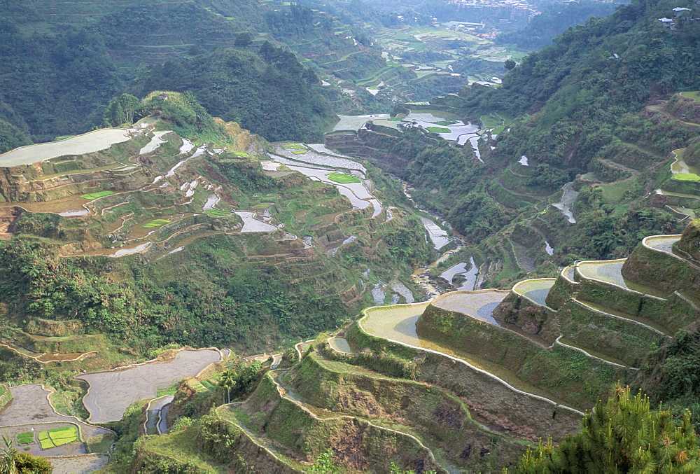 Rice terraces at Banaue, UNESCO World Heritage Site, northern region, island of Luzon, Philippines, Southeast Asia, Asia