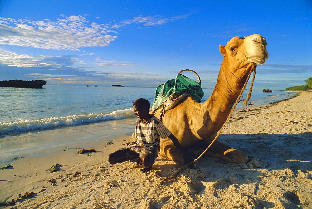 Camel on the beach, Kenya