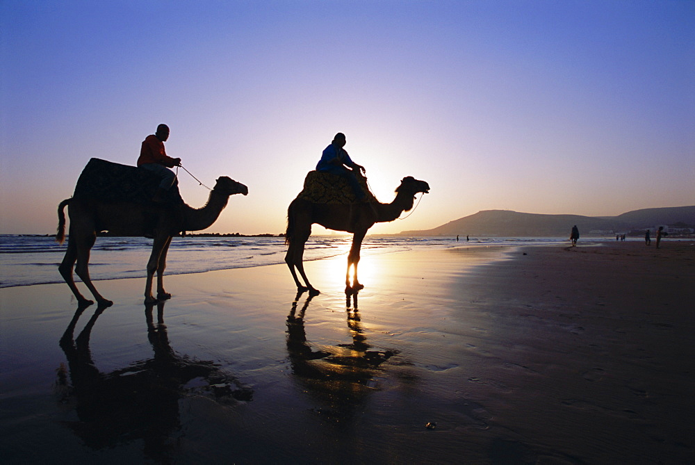 Camels on the beach, Morocco, North Africa, Africa