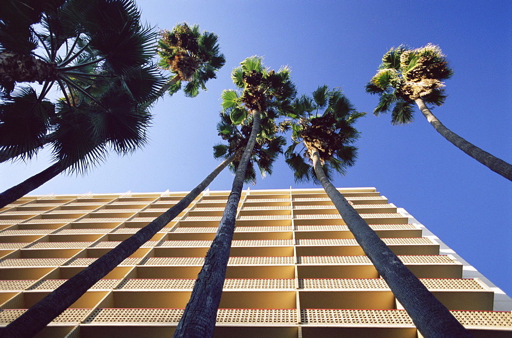 Palm trees and Hyatt Hotel, Sunset Boulevard, Hollywood, Los Angeles, California, USA, North America