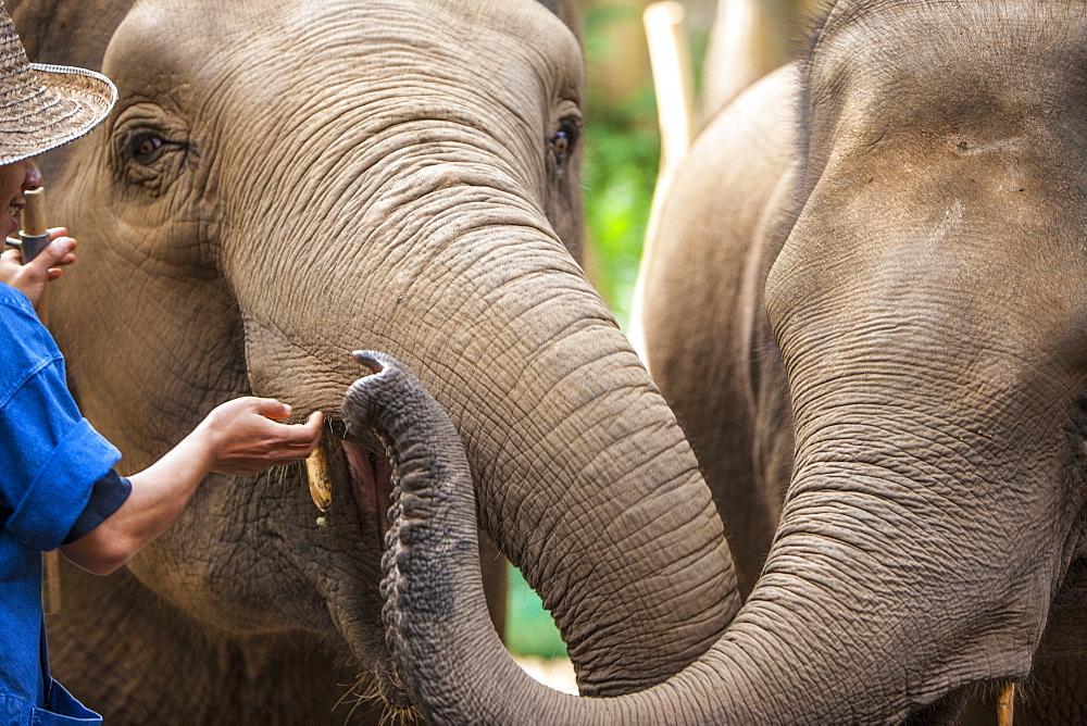 Four Seasons Elephant Camp, Northern Thailand, Southeast Asia, Asia