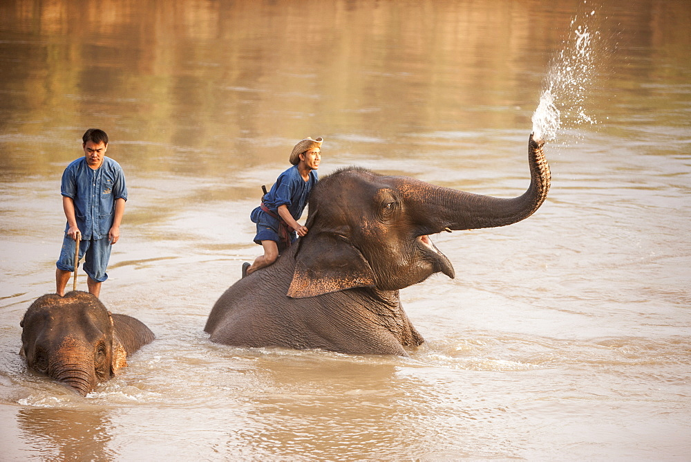 Four Seasons Elephant Camp, North Thailand, Southeast Asia, Asia