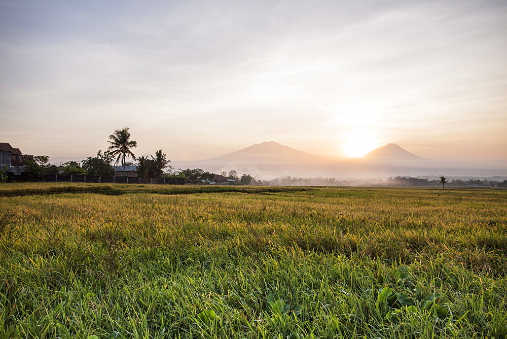 Rice field and volcanoes, Java, Indonesia, Southeast Asia, Asia