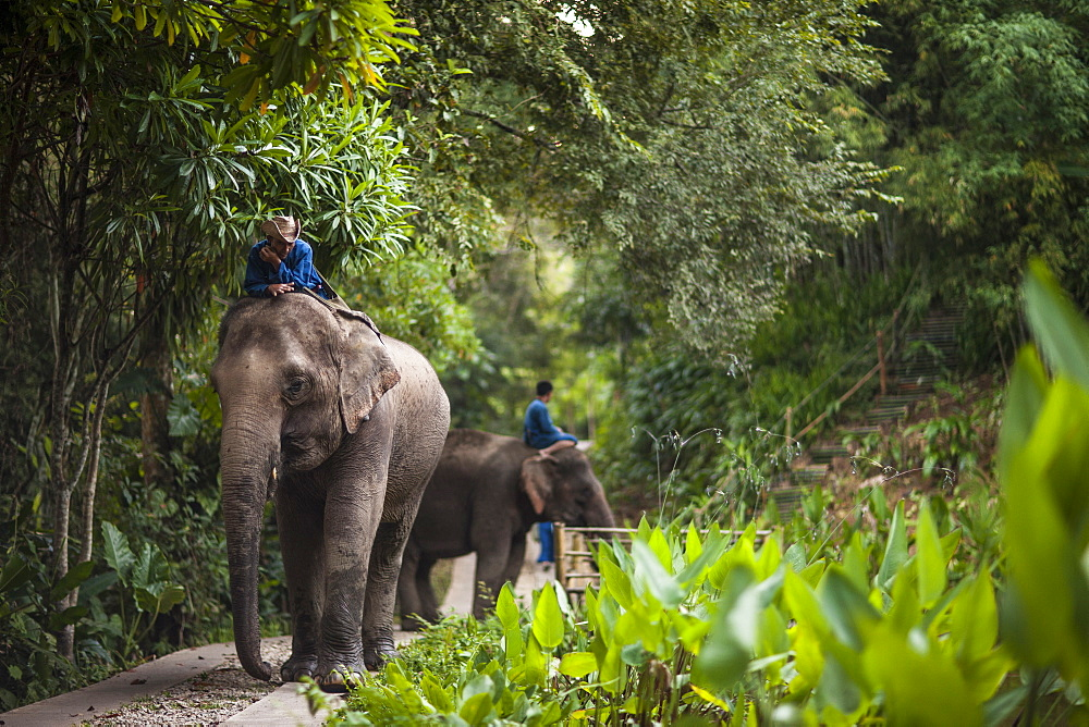 Four Seasons Elephant Camp, Golden Triangle, Thailand, Southeast Asia, Asia