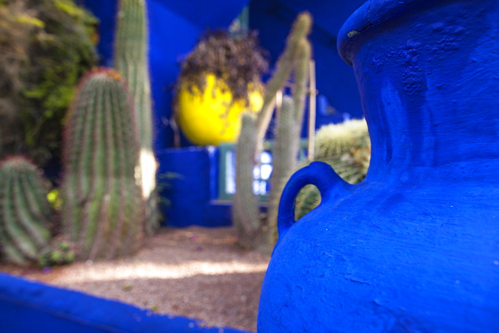 Cactus Garden in the Jardin Majorelle, Marrakech, Morocco, North Africa, Africa