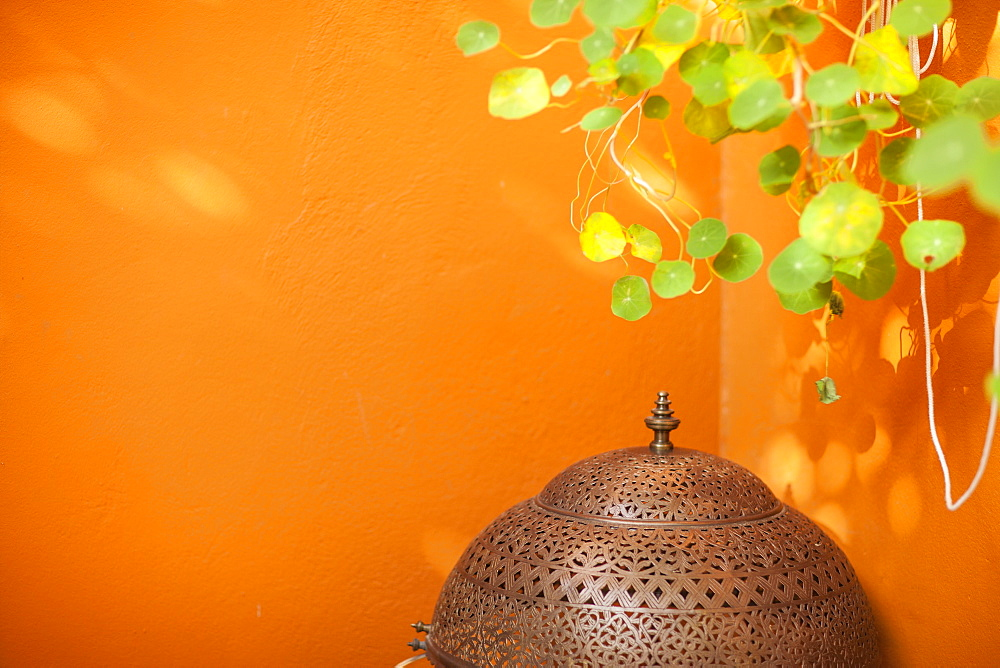 Orange wall in the Jardin Majorelle, Marrakech, Morocco, North Africa, Africa