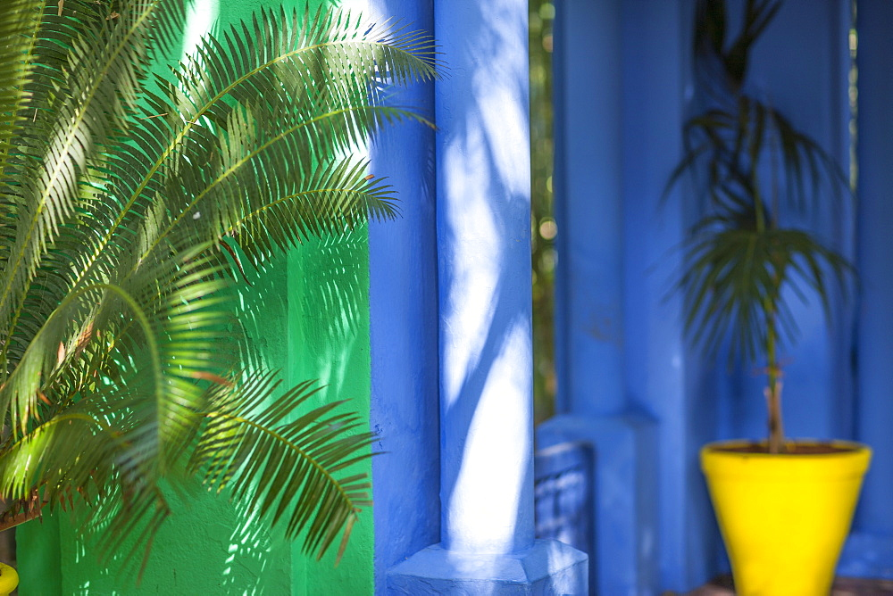 Palms in the Jardin Majorelle, Marrakech, Morocco, North Africa, Africa