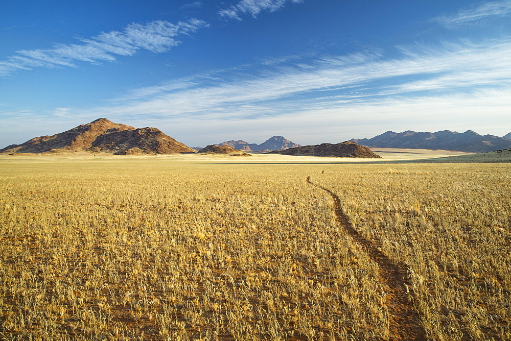 Animal track through the Namib Desert, Namibia, Africa