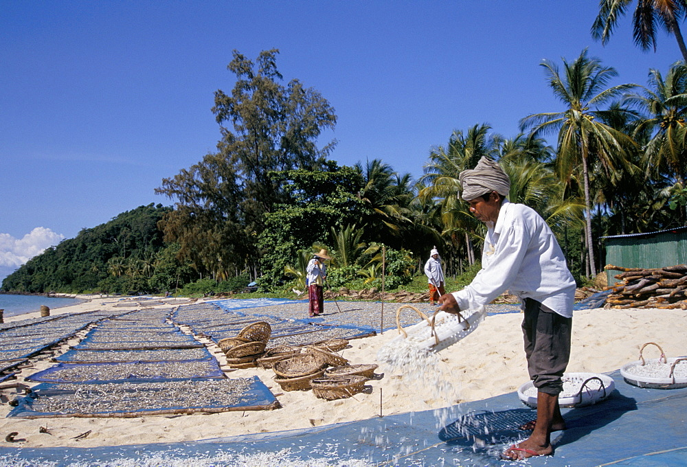 Salting fish left to dry outdoors, Phuket, Thailand, Southeast Asia, Asia