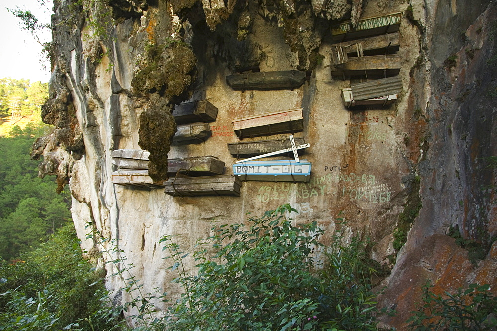 Hanging coffins of Animistic Applai elders entombed on limestone cliffs, Sagada Town, The Cordillera Mountains, Benguet Province, Luzon, Philippines, Southeast Asia, Asia