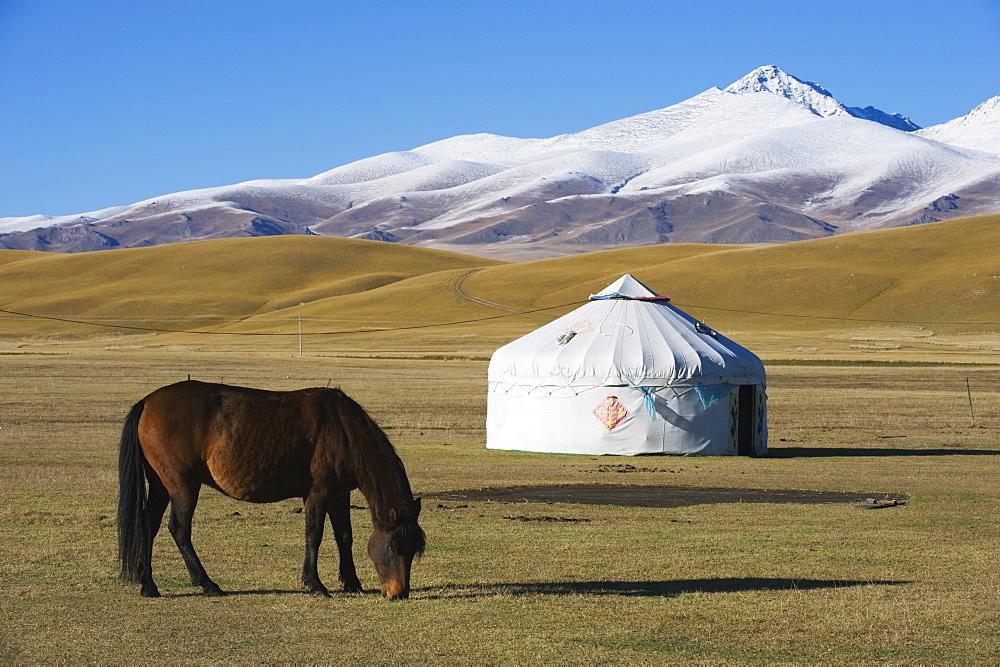 Nomads horse and yurt, Bayanbulak, Xinjiang Province, China, Asia