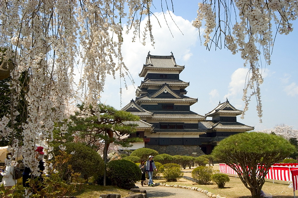 Cherry blossoms, Matsumoto Castle, Matsumoto city, Nagano prefecture, Honshu island, Japan, Asia