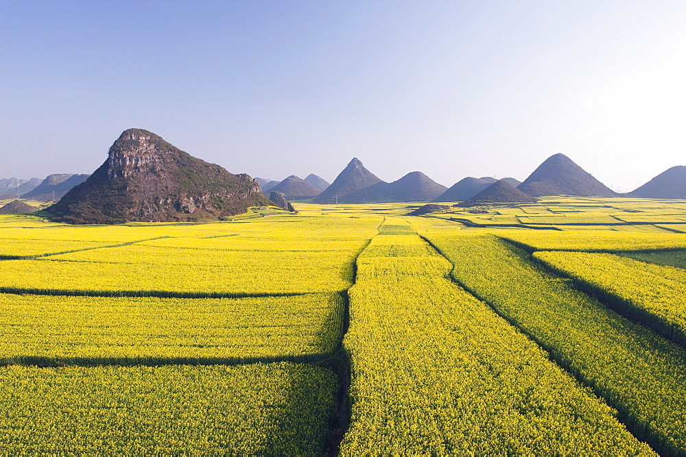 Fields of rapeseed flowers in bloom in Luoping, Yunnan Province, China, Asia - 733-3257