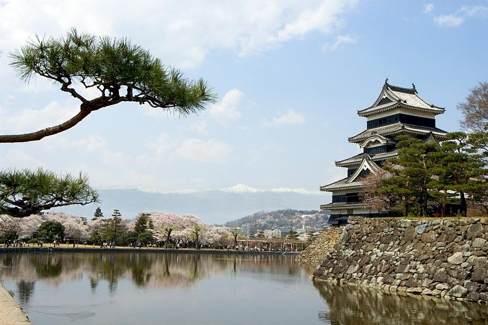 Pine tree, Matsumoto Castle, Matsumoto city, Nagano prefecture, Honshu island, Japan, Asia