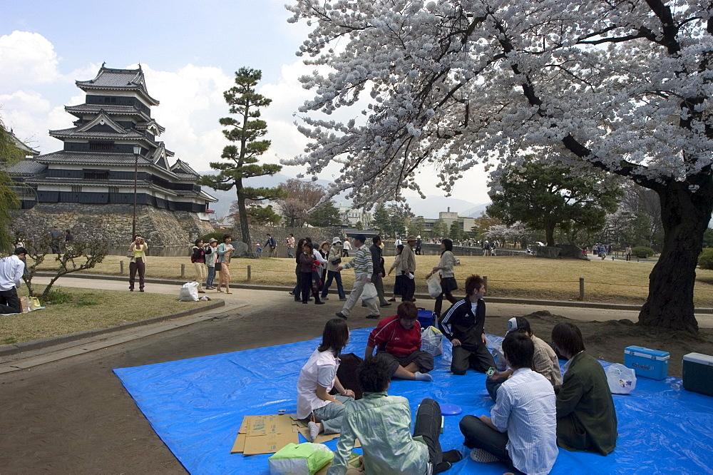 Cherry blossom viewing, hanami, Matsumoto Castle, Matsumoto city, Nagano prefecture, Honshu island, Japan, Asia