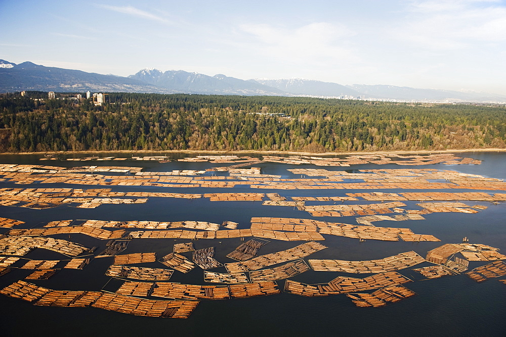 Aerial view of cut logs in the sea waiting to be transported, Vancouver, British Columbia, Canada, North America