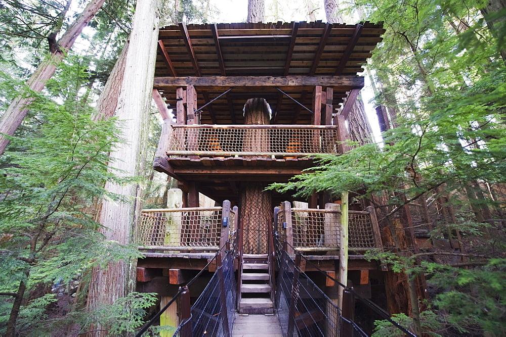 A tree house in Capilano Suspension Bridge and Park, Vancouver, British Columbia, Canada, North America