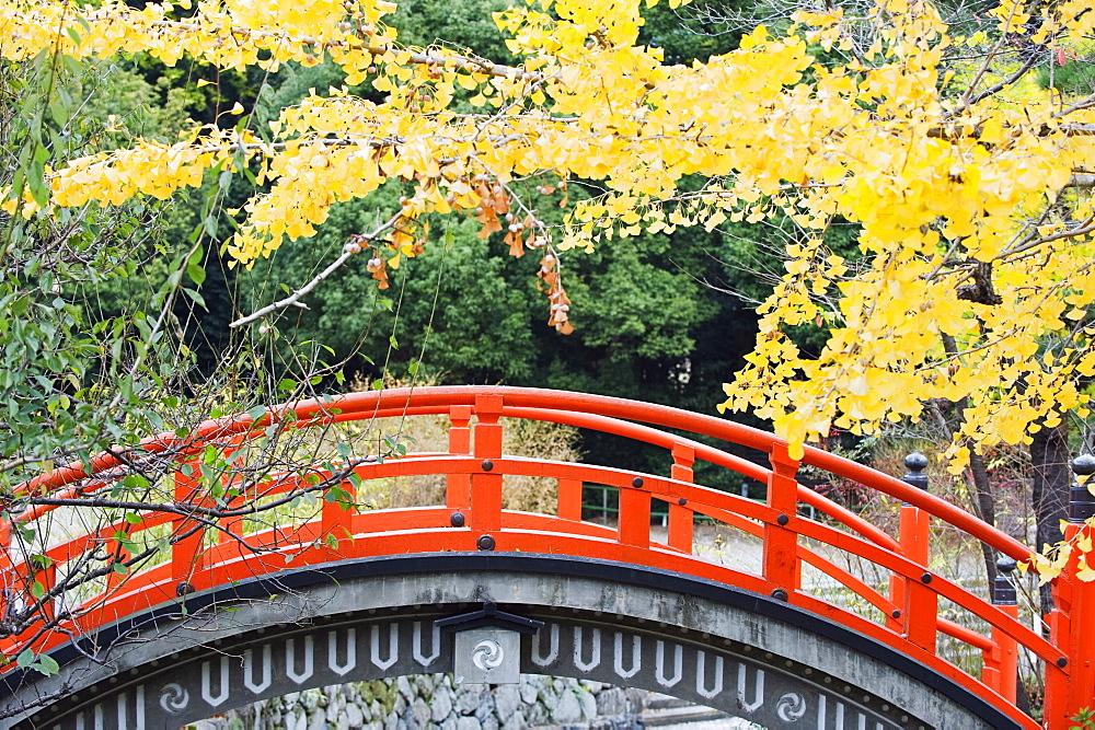 A red arched bridge and yellow gingko tree leaves, Shimogamo Shrine, Tadasu no Mori, Kyoto, Japan, Asia - 733-4050
