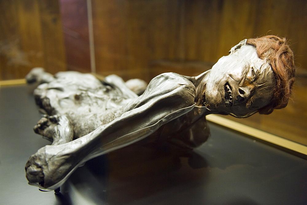 Preserved body of the 2000 year old Grauballe Man, Moesgard Museum of Prehistory, Arhus, Jutland, Denmark, Scandinavia, Europe