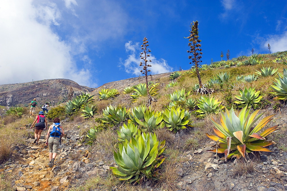 Hikers walking through cactus trail, Volcan Santa Ana, 2365m, Parque Nacional Los Volcanoes, El Salvador, Central America