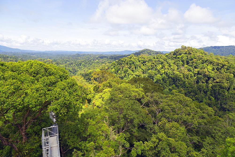 Canopy walk, Ula Temburong National Park, Brunei, Borneo, Southeast Asia, Asia