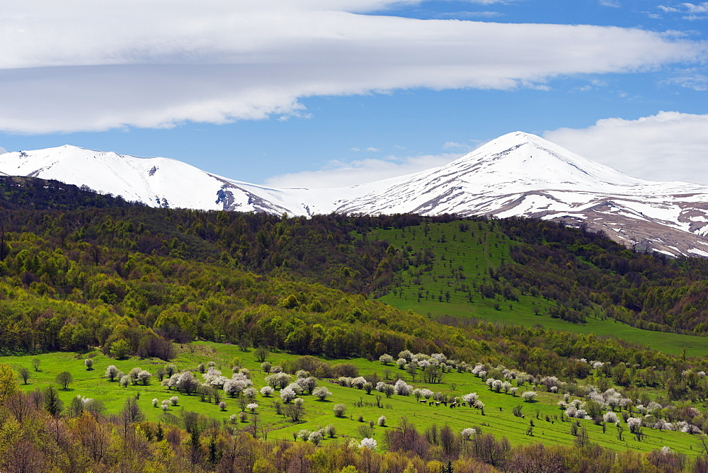 Rural scenery, mountain cherry blossom, Lori Province, Armenia, Caucasus, Central Asia, Asia