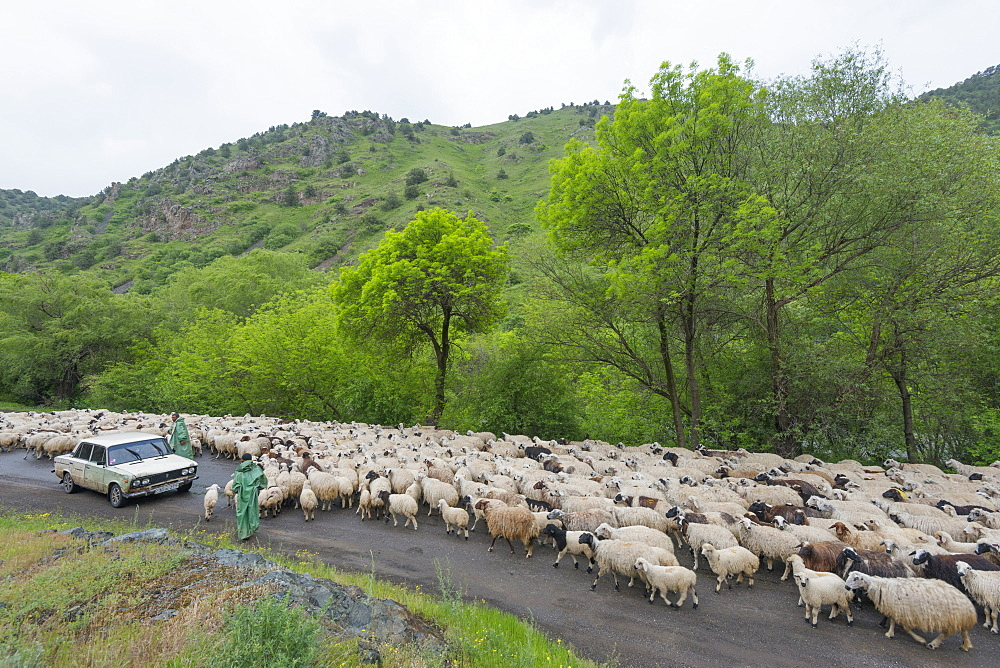 Flock of sheep on the road, Syunik province, Armenia, Caucasus, Central Asia, Asia