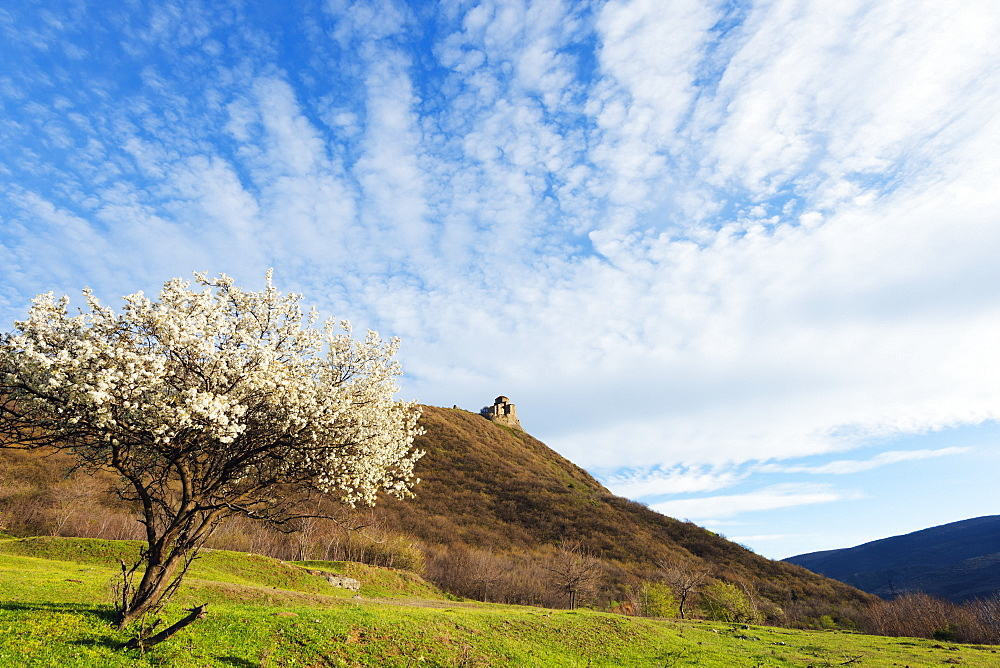 Jvari Church (Holy Cross Church),and spring blossom, Mtskheta, historical capital, UNESCO World Heritage Site, Georgia, Caucasus, Central Asia, Asia