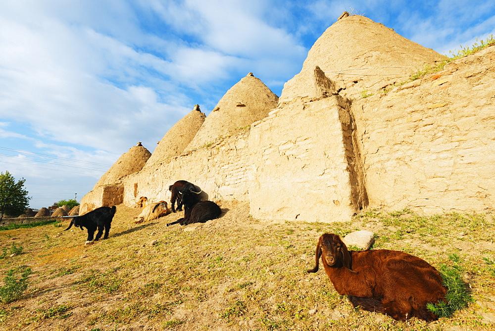 Bee-hive mud brick houses and goats, village of Harran, Anatolia, Turkey, Asia Minor, Eurasia
