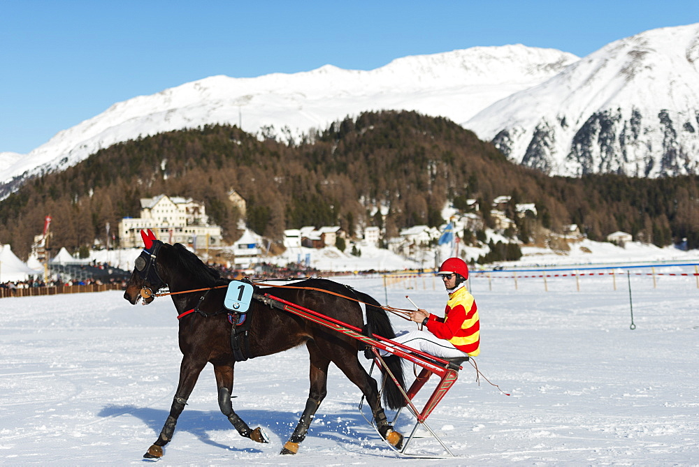 Trap event, White Turf International Horse Race, winter, St. Moritz, Engadine, Graubunden, Switzerland, Europe