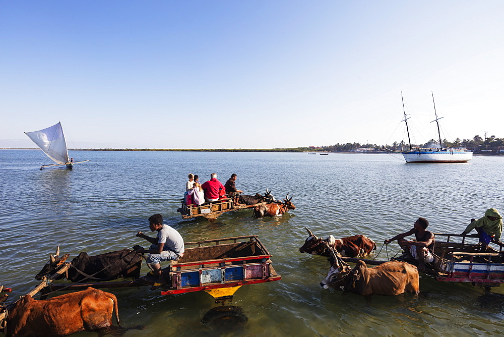 Tulear, boat to shore transfer by zebu cart for tourists, southern area, Madagascar. Africa